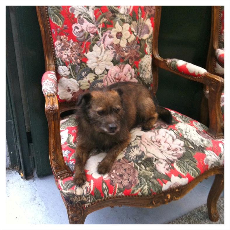 Flea Market Dog
